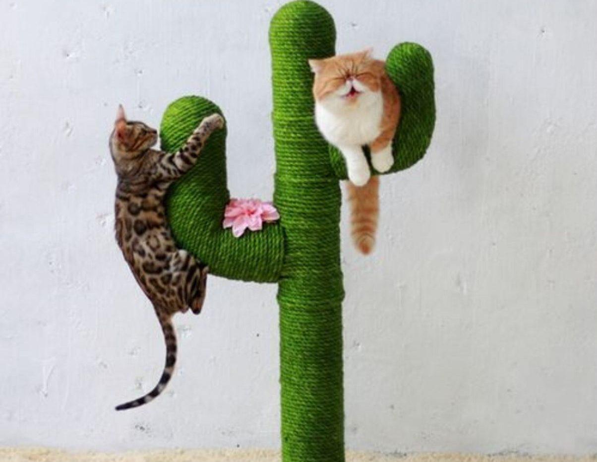 Costruire Lettiera Per Gatti tiragraffi fai da te per gatti: suggerimenti e idee | casa